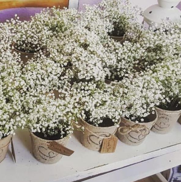 detalles de boda plantas personalizadas